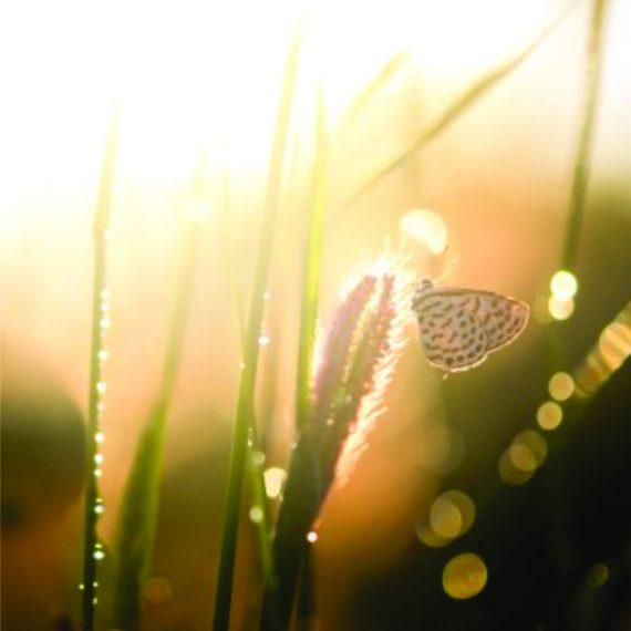 A Consciência e a Prática Das Virtudes